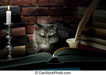 black cat reading a big book by candlelight
