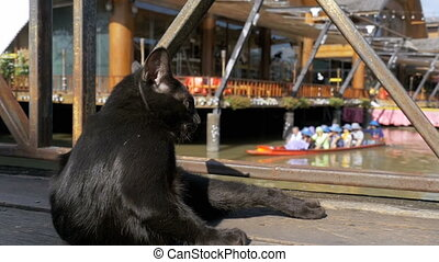 Black Cat Resting and Licking Lying on Wooden Pier in the Pattaya Floating Market. Thailand
