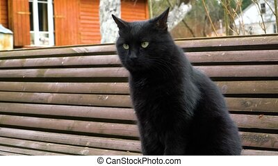 Black cat sits on the bench - Black cat sitting on the bench...