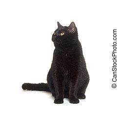 Black cat sitting down