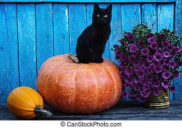 Black cat sitting on a pumpkin