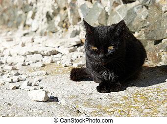 Black cat sitting on the ground.