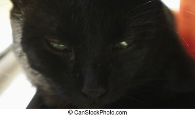 Black cat sitting on window sill against sunlight and...