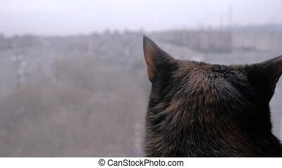 Back view: black cat sitting on windowsill and looking at window at home - slow motion, close up. Animal and pet concept