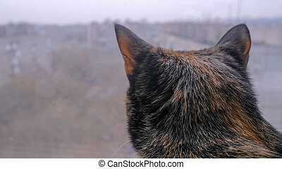 Back view: black cat sitting on windowsill and looking at window at home - close up, blurred background. Animal and pet concept