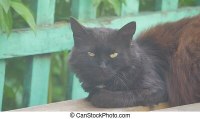 black cat sitting slow motion video on the bench basking in the sun pet lifestyle