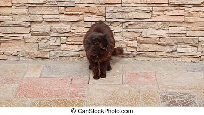 Black cat stretching in front of building wall - Black cat...