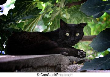 Black Cat Under Fig Tree