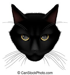 Black cat - Head of black cat isolated on a white background