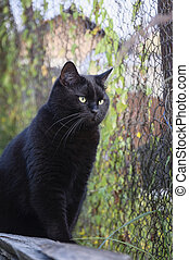 Black cat walking in garden