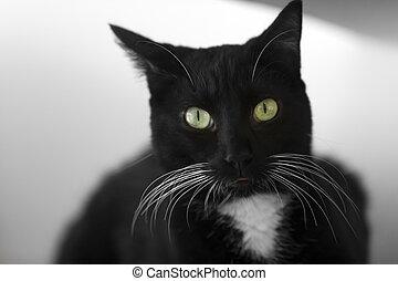 Black Cat Whiskers Closeup