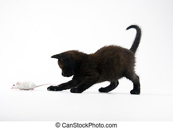 Black cat & White mouse - Cat - the small furry animal with...