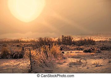 Black Cat Winter Sunrise