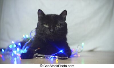 black cat with a Christmas garland. slow motion