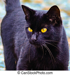 black cat with glowing yellow eyes