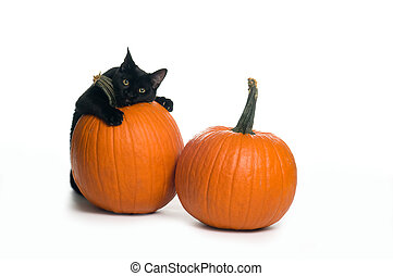 black cat with two pumpkins on a white background