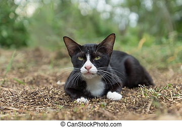 Black cat with white feet and a nose on the ground.