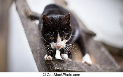 black cat with white paws 2 - black cat with white paws...