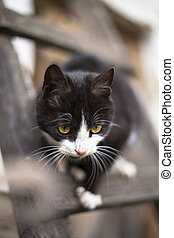 black cat with white paws crept up the ladder