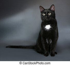 Black cat with white spot sits on gray background