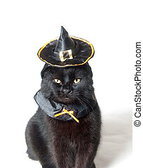 Black cat with witch hat - Cute black cat with witch hat on...