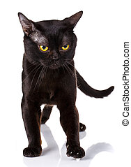 black cat with yellow eyes on a white background
