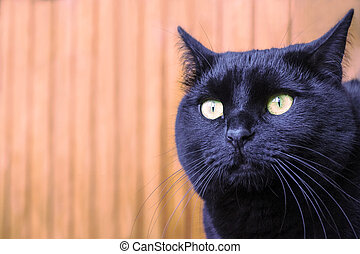 black cat with yellow eyes, portrait