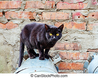 Black cat with yellow eyes stands on a pipe against a background of a brick wall