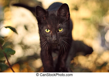 Black cat with yellow-green eyes on tree
