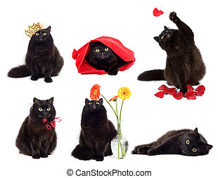 black cats isolated collage of six photos