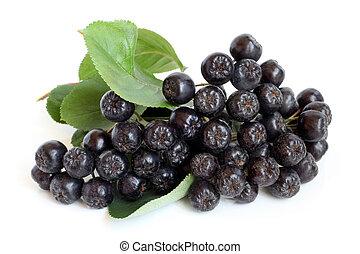 Black chokeberry on a white background