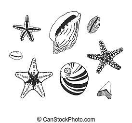Hand Drawn marine illustration - Black contour starfish...
