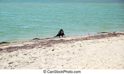 black cormorant on the beach on a summer day