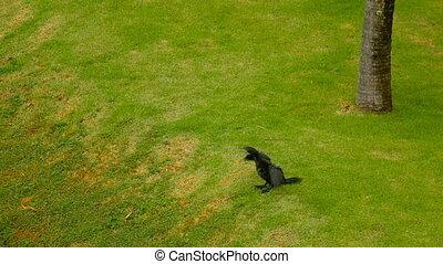 Black Cormorant on the river bank - Black Cormorant on the...