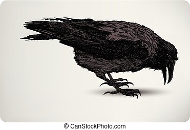 Black Crow, hand drawing, vector illustration..eps