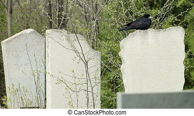 Black Crow On Tombstone At The Cemetery