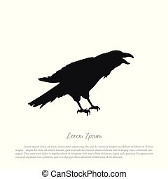 Black crow silhouette on a white background. Raven isolated.