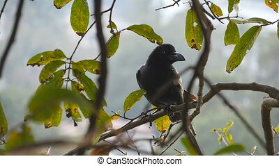 Black crow sits on a tree branch in the park. Slow motion Close up