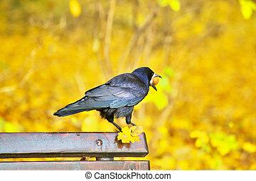 Black crow sitting on bench