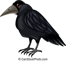 Black crow standing on white background