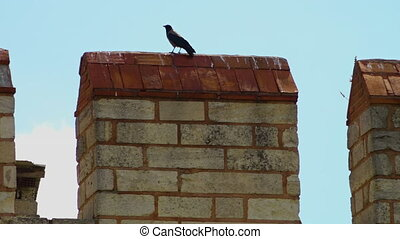Black crow stands on a roof top pillar