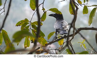 Black crow was sitting on a tree branch in the park and flew away. Slow motion