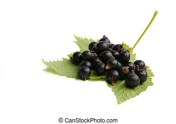 Black currant berry on the leaf. Still life