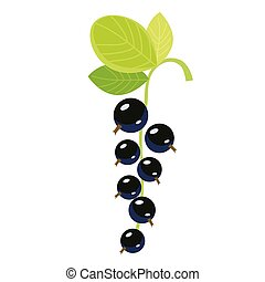 black currant flat simple illustration. Kitchen cooking - vegetables and fruits series.