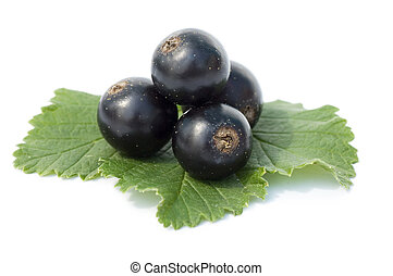 black currant isolated on white background