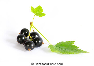 black currant fruits isolated on white background