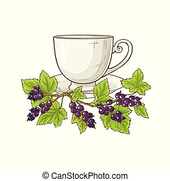 black currant tea illustration on white background