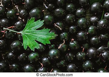 black currant texture