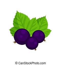Black currant vector illustration isolated on white background.