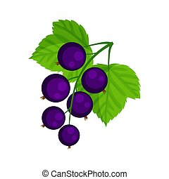 Black currant vector illustration isolated on white .